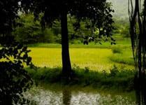 07-monsoon-india